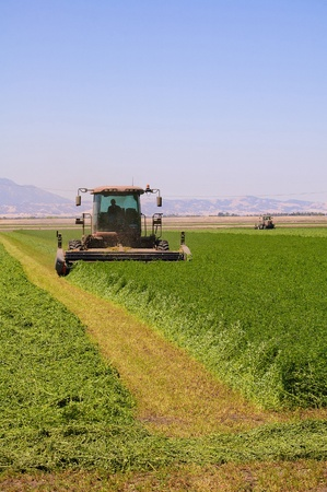 Combine harvester cutting a field of alfalfa photo