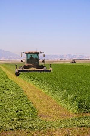 combine harvester: Cosechadoras de corte de un campo de alfalfa