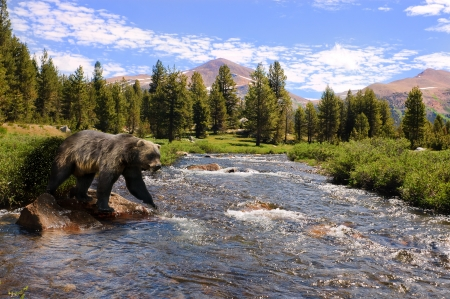 Grizzly bear about to cross a stream Фото со стока
