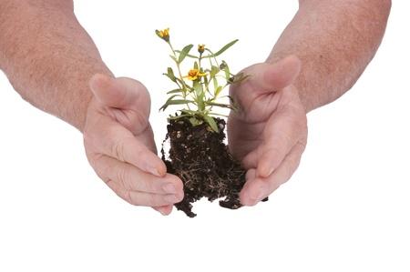 contaminacion ambiental: Flor de plántulas pequeñas listo para la siembra