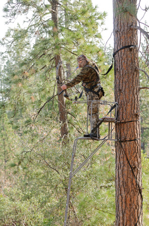 Bow hunter in a ladder style tree stand with bow at full draw, demonstrating good safety by using a safety harness photo