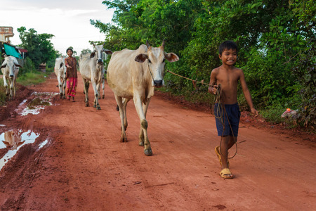 SIEM REAP, CAMBODIA - SEPTEMBER 5, 2015: A boy and his mother walk cows down a dirt road in the countryside.