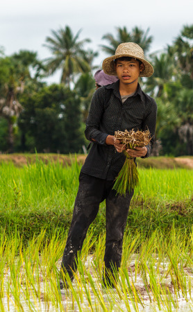 SIEM REAP, CAMBODIA - 9122015: A rice farmer works in the fields near his village.