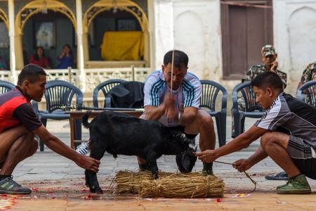 KATHMANDU, NEPAL - 9262015: A goat is sacrificed during a military ceremony at Durbar Square in Kathmandu, Nepal. Editorial