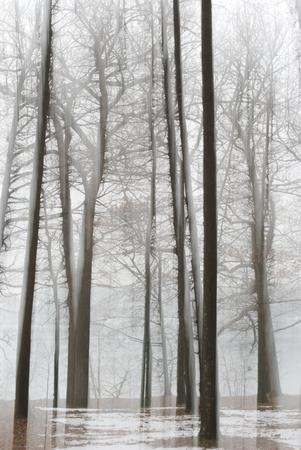 bare trees on frozen ground appear to float Reklamní fotografie