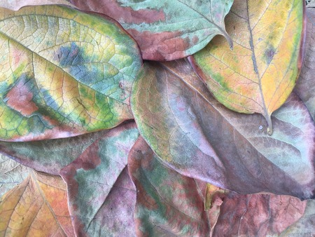 Evocative grouping of decaying leaves