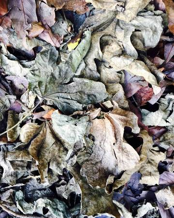 Decaying Fig leaves create abstract alien world Stock Photo