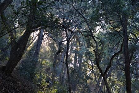 light filters through an oak filled canyon Banco de Imagens