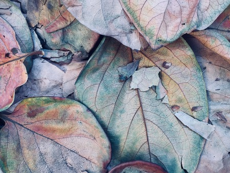 decaying leaves evokes fantasy world Stock Photo