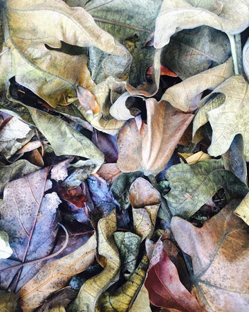 Decaying fig leaves reveals fantasy world