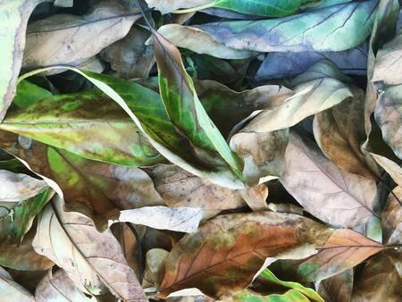 Decaying Avocado leaves reveals fantasy world Stock Photo