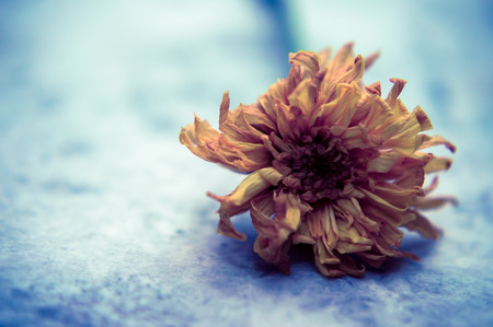 Dried Flower on Marble