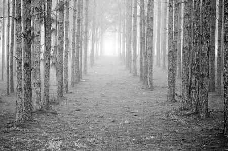 Rows of Trees Imagens
