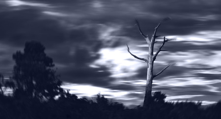 Dead Tree in Storm Stok Fotoğraf
