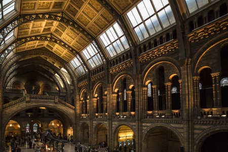 Natural history museum london combination of diffused light from ceiling windows and interior tungsten light Editorial