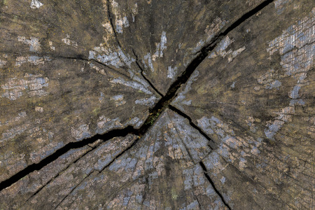 Crack across a old wooden tree stump close up details and patterns Фото со стока