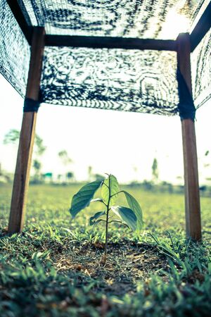 Small growing gardening farm fruit plant tree crop with frame for support