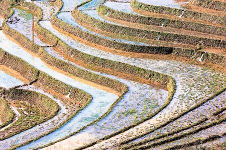 Early planting season of terrace rice paddy field in Sapa Lao Cai Vietnam indochina