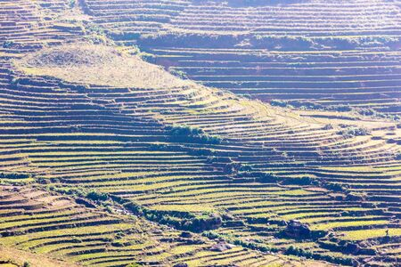 Early planting season of terrace rice paddy field in Sapa Lao Cai Vietnam indochina