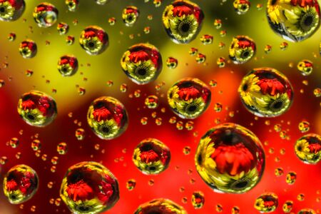 Vivid color of water drop reflection refraction of flowers on transparent glass
