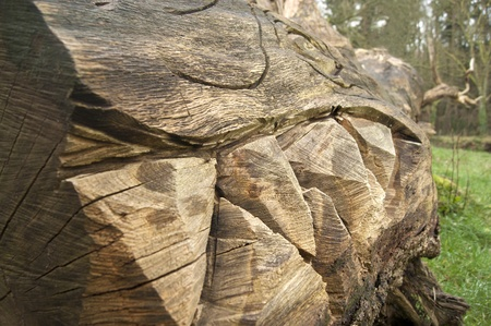 carved letters: Sharks teeth carved into the trunk of a fallen tree