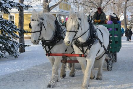 Festive Holiday Horse Drawn Wagon Ride with Snow