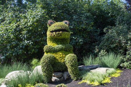 Frog shaped bushed in green landscaped outdoor gardens