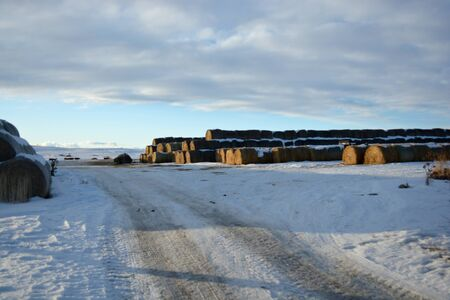 Large Stacks of Hay Bails on a Snowy Farm Field in Winter Banque d'images