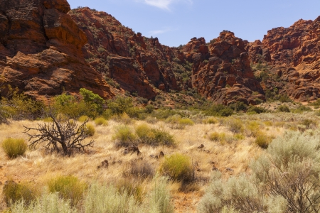 plantas del desierto: Plantas del desierto amarillo y verde de oro en un ca��n de Utah Foto de archivo
