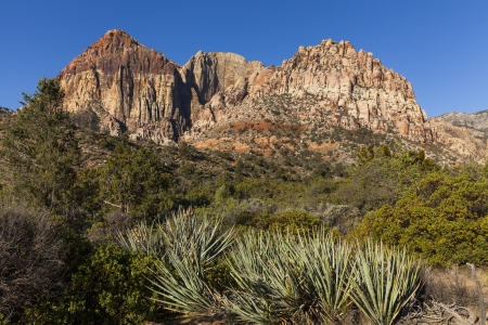 yucca: Red Rock mountains with Yucca Stock Photo
