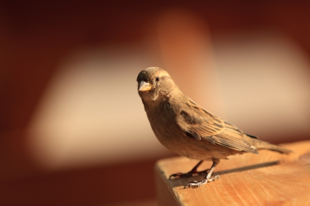 warble: A small bird was standing on a table at the end of the day by a nice and warm natural light