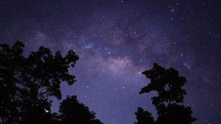 The Milky Way and some big trees, In The rice fields in the rainy season Thailand