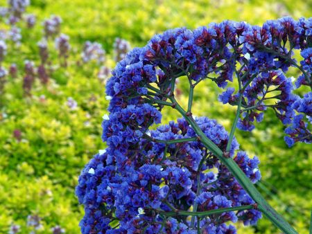 vegatation: rich blue flowers agains yellow and green background         Stock Photo