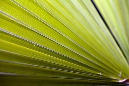 horizontal closeup of green blades of plant