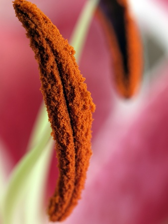 Pollen covered plant closeup with blurred colors in background Banco de Imagens