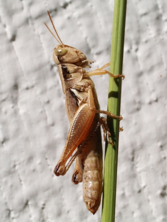 Closeup of Grasshopper on Green Plant Outdoors