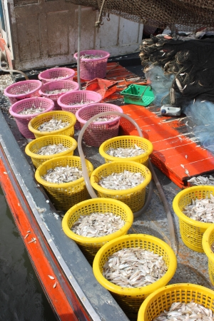 Fish in the baskets, east of Thailand