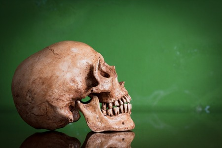 Weathered human skull with mirror image on green background, still life photo