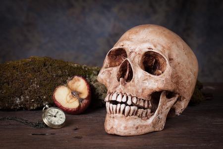 Weathered human skull, Still life photo