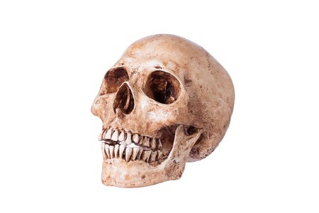 Human skull, Isolated on a white background. photo