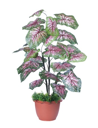 plant for house and office decoration