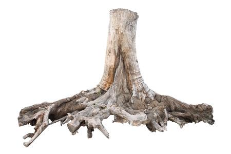 Tocón de un árbol grande, aislado en fondo blanco Foto de archivo - 38001027
