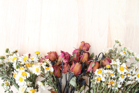 Colorful flowers with soft blur for background.