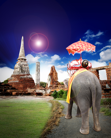 elephant thailand travel concept