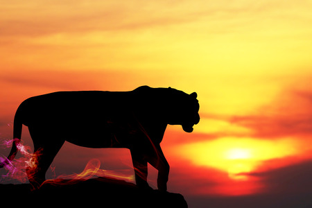 Silhouette of Tiger