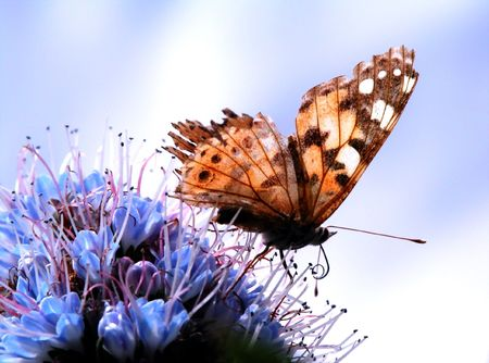 polen: Butterfly in my garden