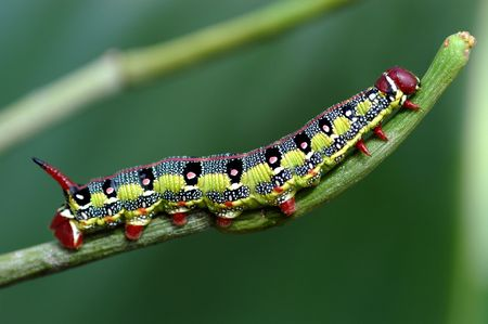 Macro caterpillar Stock Photo