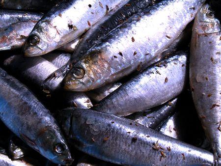 sardinas: textura de la sardina Foto de archivo