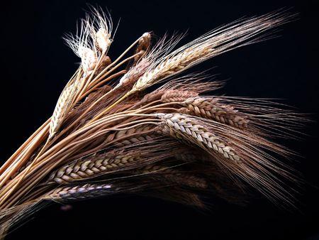 Una rama de trigo orejas  Foto de archivo - 913438