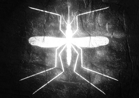 dengue fever: Virus diseases transmitter. Mosquito silhouette. Concrete textured surface Stock Photo